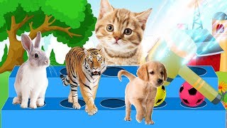 Learn Colors Learn Animal Name and Sound with Animals | Learning Color With Baby