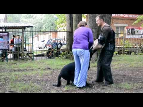 видео: Бомон Росс Евразия  Как кусаться я училась