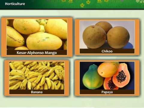 Gujarat Agriculture