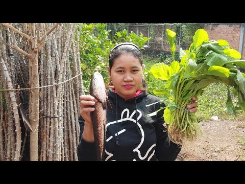 Awesome Cooking Soup Vegetable Cabbage W/ Fish Recipe – Cook Fish Recipes – Village Food Factory