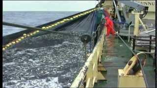 Trygt hjem - farlig fiskeryrke