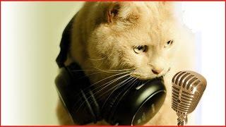 Поющие котята