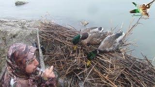 Yeşilbaş Ördek avı 🦆