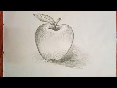 Apple sketch for kids