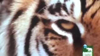 Eye of the Tiger   Official Music Video   Motivational Vide