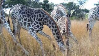 Animals of Zimbabwe