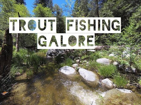 Wild Brown Trout In Southern California: Fishing Trip