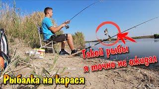 Бюджетная рыбалка на карася осенью Снасть УБИЙЦА КАРАСЯ Уловистая осенняя прикормка Река Малый Утлюк