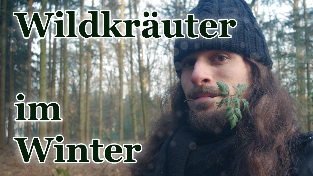 Essbare Wildkräuter im Winter - Auch zur kalten Jahreszeit bestens mit frischem Blattgrün versorgt!