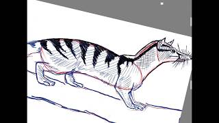 How to draw a banded palm civet