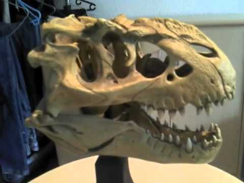 480 x 360 jpeg 14kBVastatosaurus