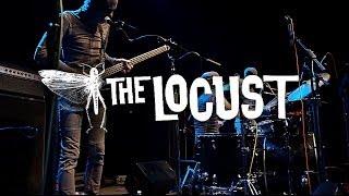 the locust @ porter