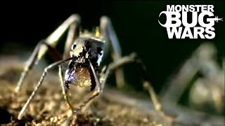 Dinosaur Ants vs Trap Jaw Ants | MONSTER BUG WARS