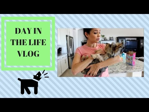 DAY IN THE LIFE VLOG | STAY AT HOME MOM | PO BOX,  PUPPY PROBLEMS, YOUTUBERS