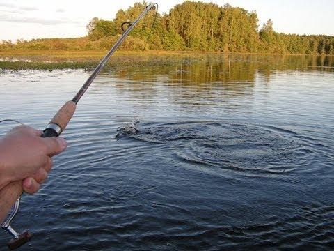 Видео ловля щуки летом Смотреть на ловлю щуки летом на спиннинг ...