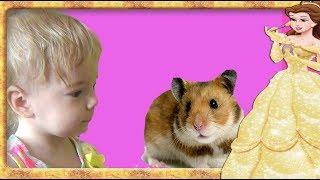 Facem cunostinta cu Hamsterul!!! Anabella Show