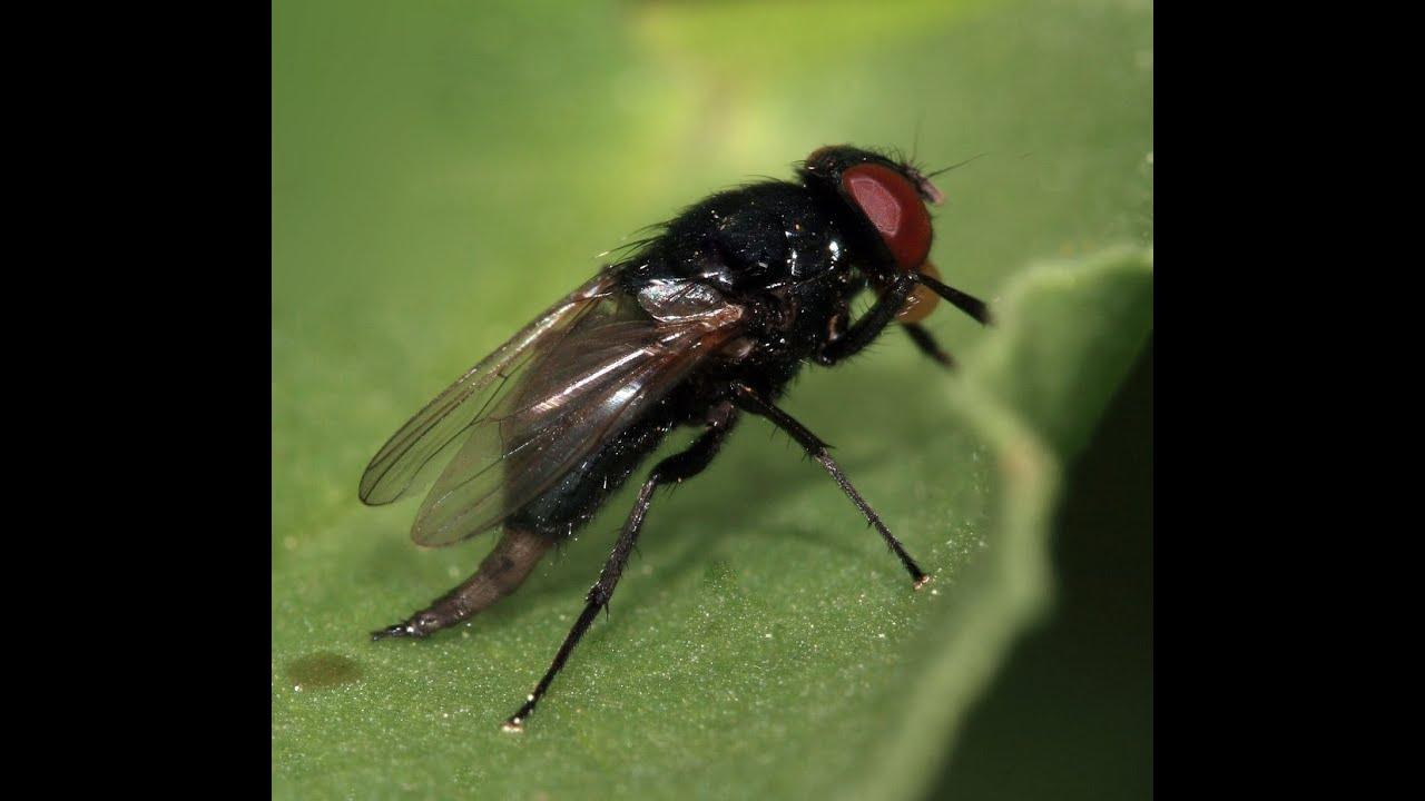 Sin moscas, la humanidad no sobreviviría