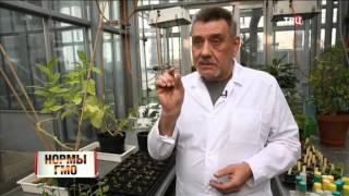 Нормы ГМО. Линия защиты