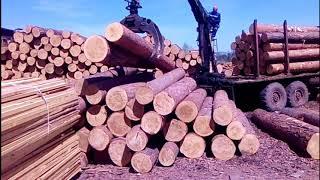 Камаз фишка (фискарс) - работа фискариста - сортировка леса манипулятором