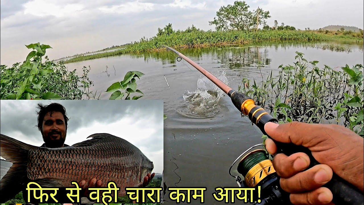 फिरसे वही चारा कामयाब रहा || रोहु कतले का बेहतरीन शिकार हुई Rohu Fishing bait || fish hunting