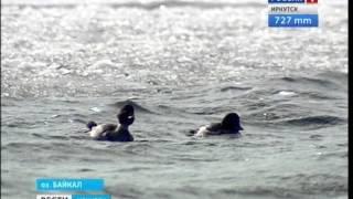 Туристов на отколовшейся льдине в пос  Листвянка спасли,