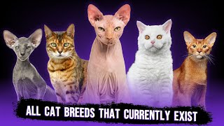 These Are All Cat Breeds That Currently Exist