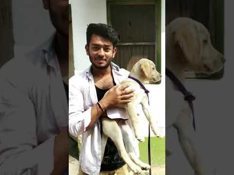 Bihar Customer feedback for Rohit Pet Care Dog kennel in uttar Pradesh India 8650006680