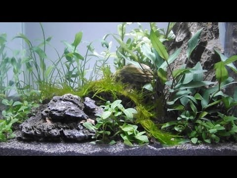 Superior Aquascape By Owen White, 11yrs Old, Using Tropica Plants, Substrate And  Fertilizers   YouTube