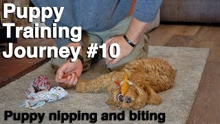 How to Stop a Puppy Biting and Nipping. #10