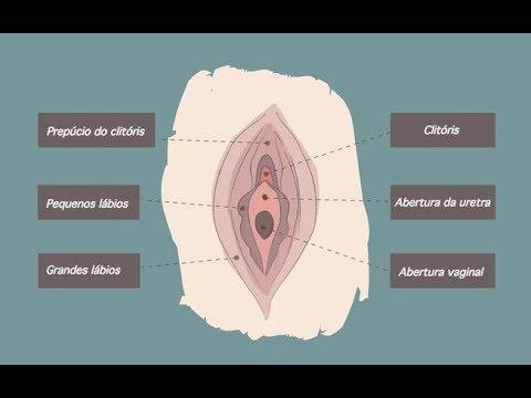 Você conhece sua pepeca Saiba tudo sobre vagina, vulva e região íntima feminina!