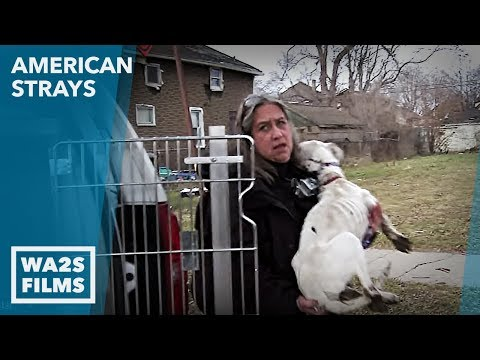 Animal Cops Detroit Rescue Dogs From Neglect The Dirty Side of Dog Rescue Hope For Dogs | My DoDo