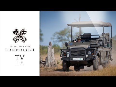 Introducing: The Electric Landrover | Londolozi Blog
