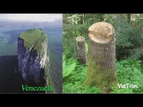 Düz Dünya / hz Adem - hz Nuh Zamanındaki Ağaçlardan geri Kalanlar ?