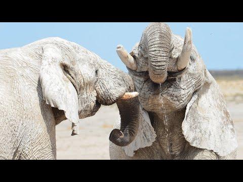The Waterhole - Amazing Wildlife Sightings In Etosha