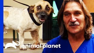 Street Dog With A Broken Leg Gets A Second Chance | Dr. Jeff: Rocky Mountain Vet