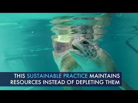How Aquaponics System Helps Grow Sustainable Food For Sea Turtles