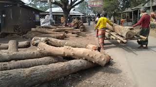 Toughest Wood Lifting Work at Sawmill।Wood Cutting After Lifting।Logging Lifting Ways