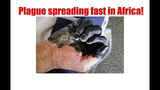 Plague starting in Africa panic already