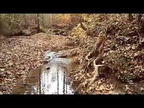 Georgia Gold Prospecting | A&M Mining (Finding gold in creeks with a pan and shovel) November 2016