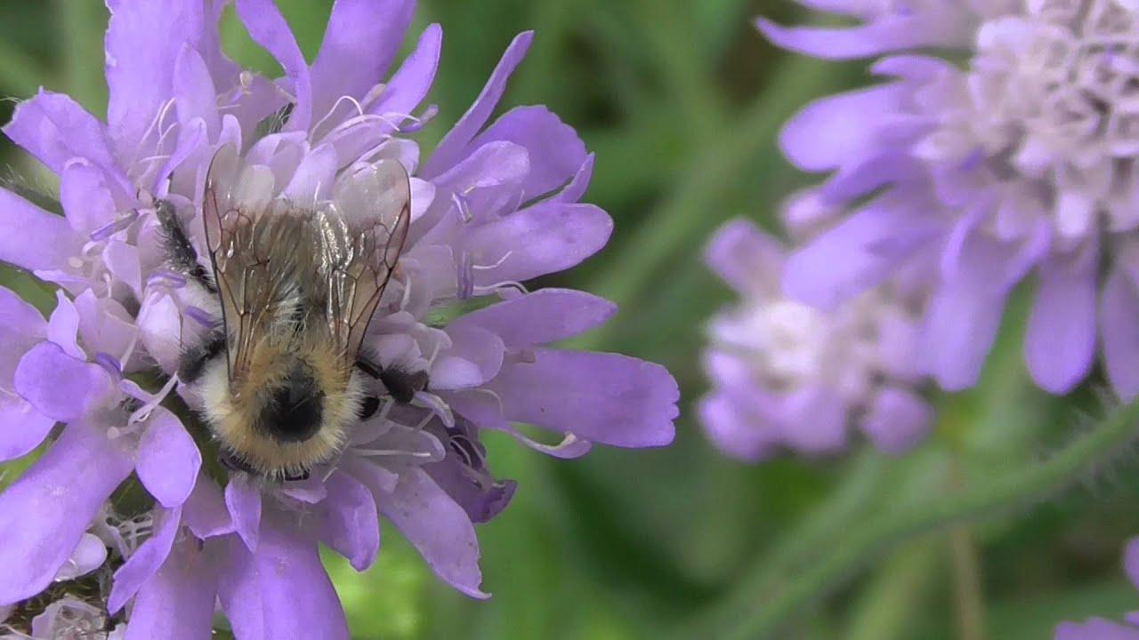 Bee On Purple Flower Stock Photo  Shutterstock