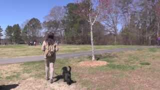 Dog Training, Raffi, Day 8: Distraction Training At Two Dog Parks