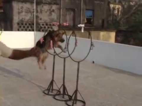 ATISH  CHAKRABORTY     OBIDIENCE    DOG    TRAINING   AND  ALL  TYPES  OF  DOG's