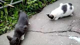 Кошка и ее взрослые котята вместе едят