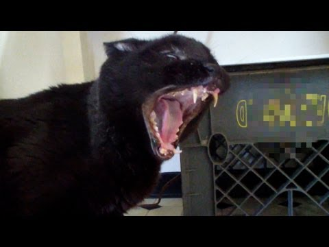 Thumbnail: Talking Kitty Cat 30 - Demon Cat