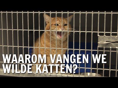 Waarom vangen we wilde katten? | De Buitendienst over Zwerfkatten
