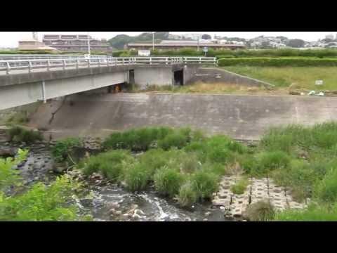 ナマズ釣り 雨竜川   by bmsb4gt