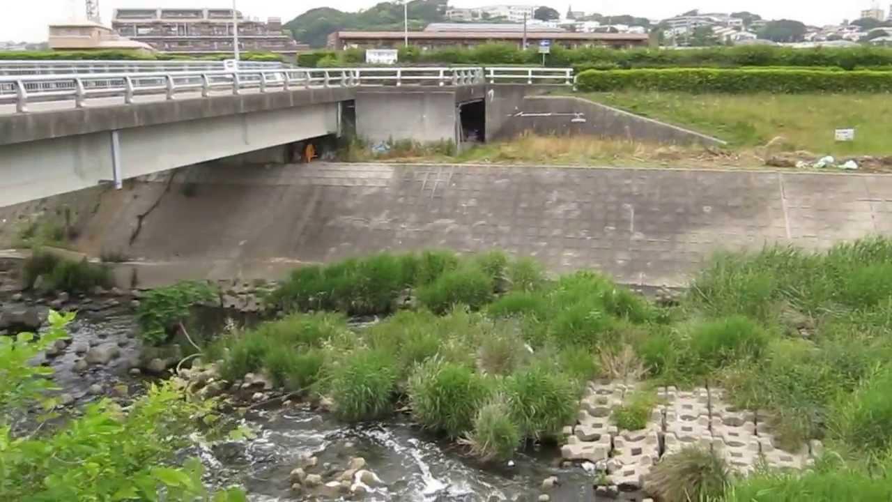 植田川 排水口 名古屋魚釣りポイ...