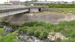植田川 排水口 名古屋魚釣りポイント コイ ナマズ ブラックバス