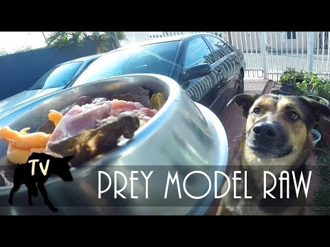 Edu the Raw Fed Dog | Raw Feeding Vlog