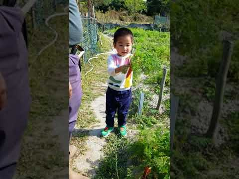 J picking carrots and vegetables in Dragon Tail Organic Farm in Lantau Island Hong Kong